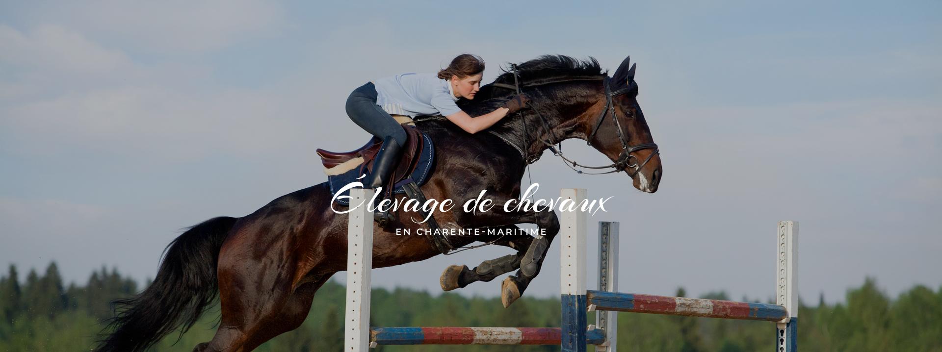 elevage chevaux ricou